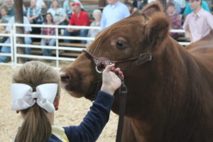 Cover photo for Wilson County 4-H Livestock Show & Sale- Interest Meeting