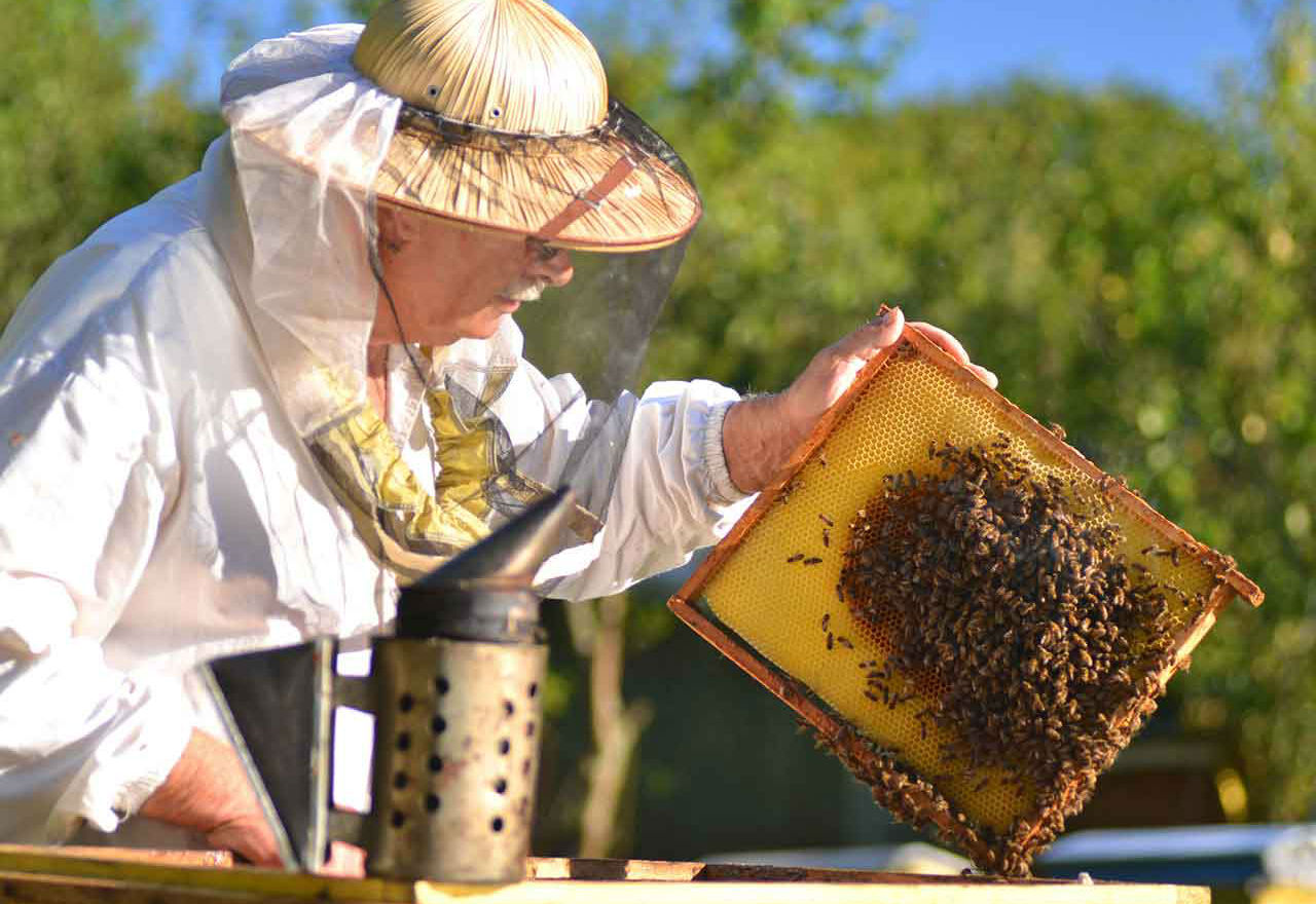 Image of a beekeeper