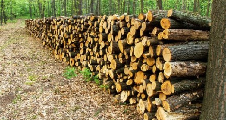 Timber logs piled up